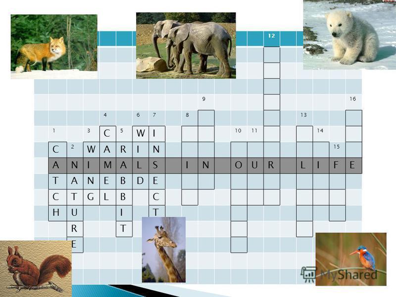 12 916 467813 13 C 5 WI 101114 С 2 WARIN 15 ANIMALSINOURLIFE TANEBDE CTGLBC HUIT RTS E