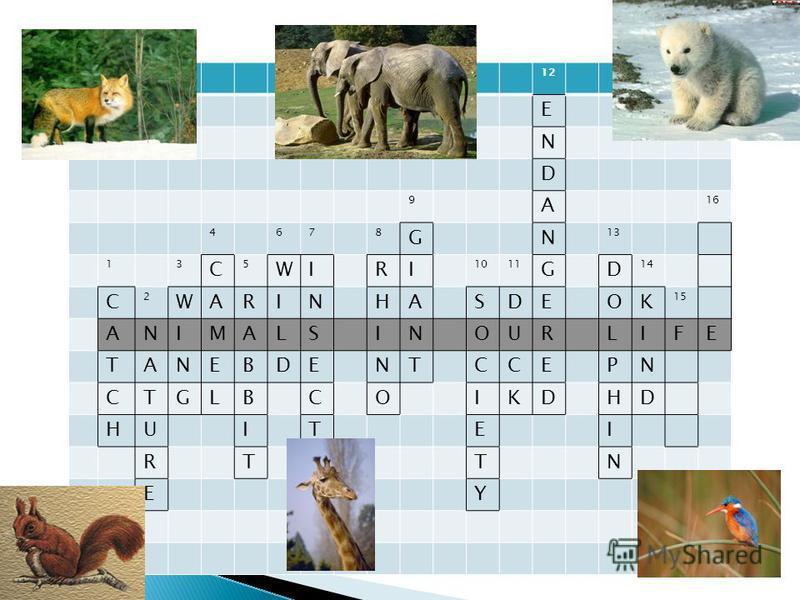 12 E N D 9 A 16 4678 GN 13 13 C 5 WIRI 1011 GD 14 С 2 WARINHASDEOK 15 ANIMALSINOURLIFE TANEBDENTCCEPN CTGLBCOIKDHD HUITEI RTSTN EY