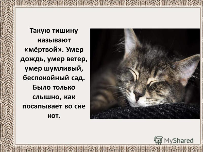 Такую тишину называют «мёртвой». Умер дождь, умер ветер, умер шумливый, беспокойный сад. Было только слышно, как посапывает во сне кот.
