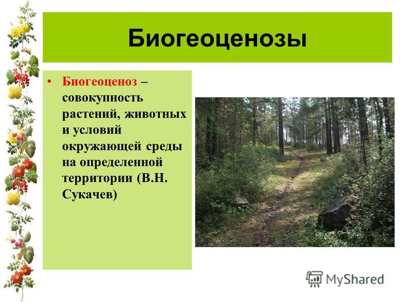 Биогеоценозы Биогеоценоз – совокупность растений, животных и условий окружающей среды на определенной территории (В.Н. Сукачев)