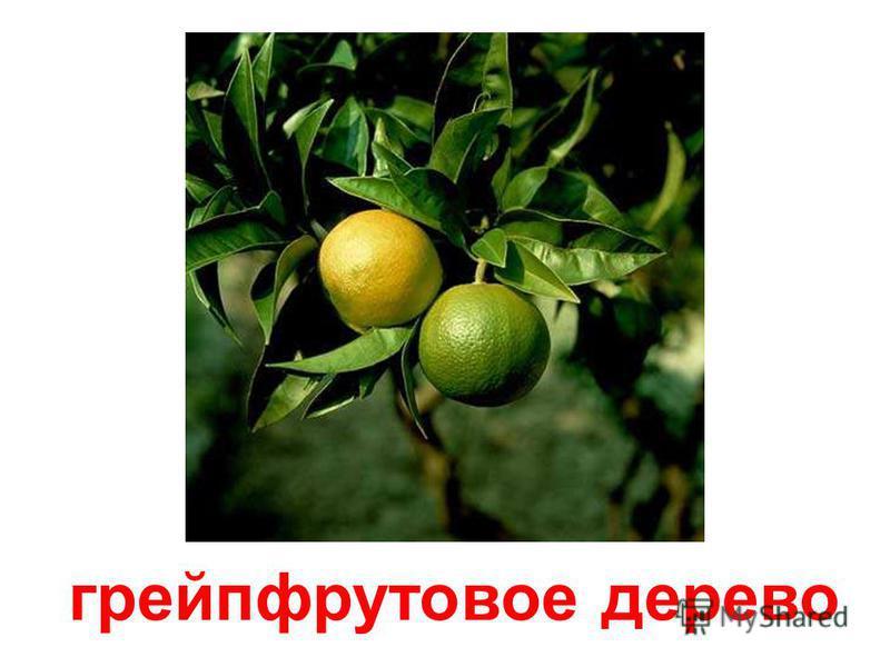 плодовые деревья Плодовые деревья. 900igr.net