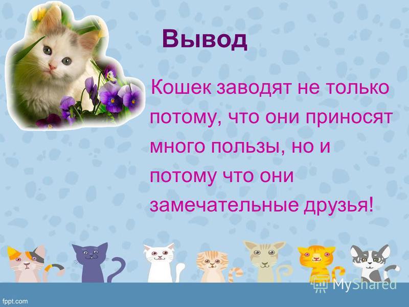 Вывод Кошек заводят не только потому, что они приносят много пользы, но и потому что они замечательные друзья!