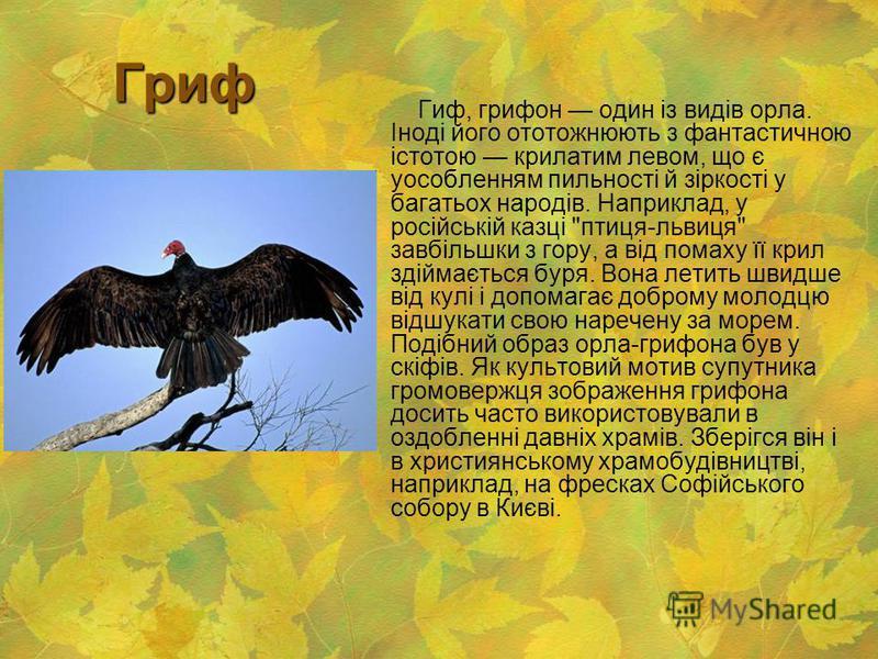 Гриф Гриф Гиф, грифон один із видів орла. Іноді його ототожнюють з фантастичною істотою крилатим левом, що є уособленням пильності й зіркості у багатьох народів. Наприклад, у російській казці