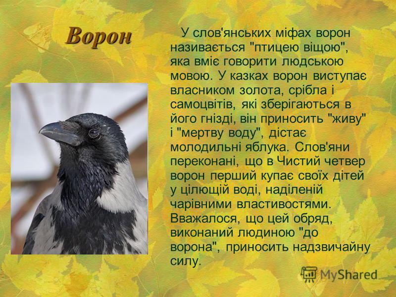 Ворон У слов'янських міфах ворон називається