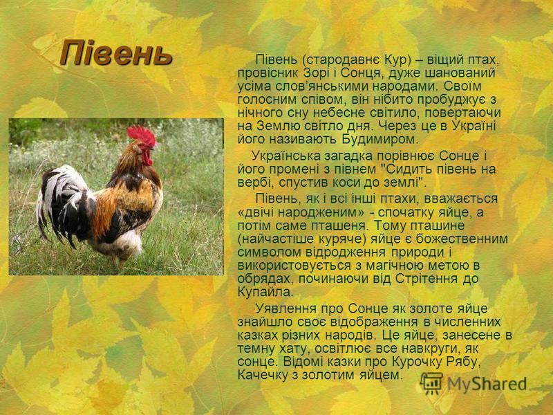 Півень Півень (стародавнє Кур) – віщий птах, провісник Зорі і Сонця, дуже шанований усіма словянськими народами. Своїм голосним співом, він нібито пробуджує з нічного сну небесне світило, повертаючи на Землю світло дня. Через це в Україні його назива