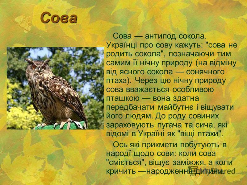 Сова Сова антипод сокола. Українці про сову кажуть: