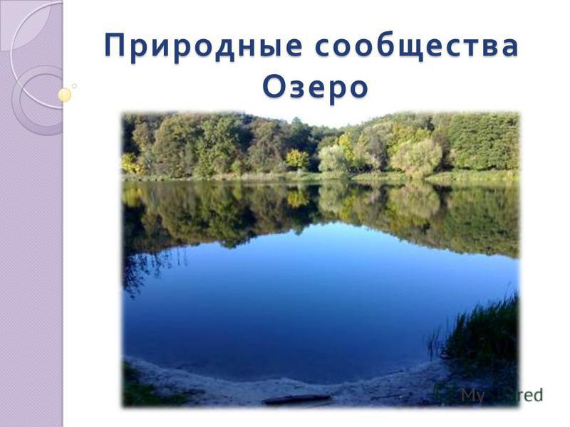 Природные сообщества Озеро