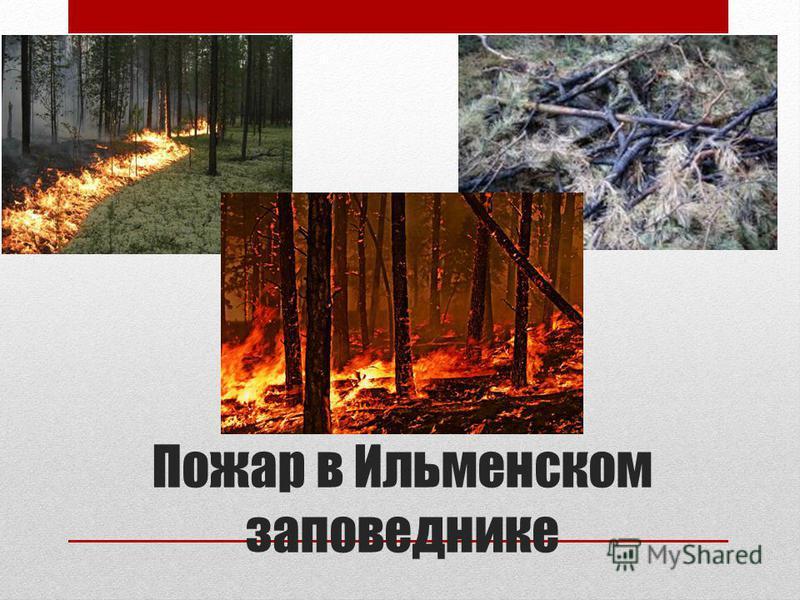 Пожар в Ильменском заповеднике
