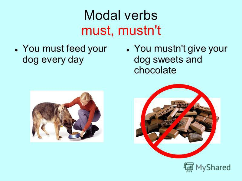 Modal verbs must, mustn't You must feed your dog every day You mustn't give your dog sweets and chocolate