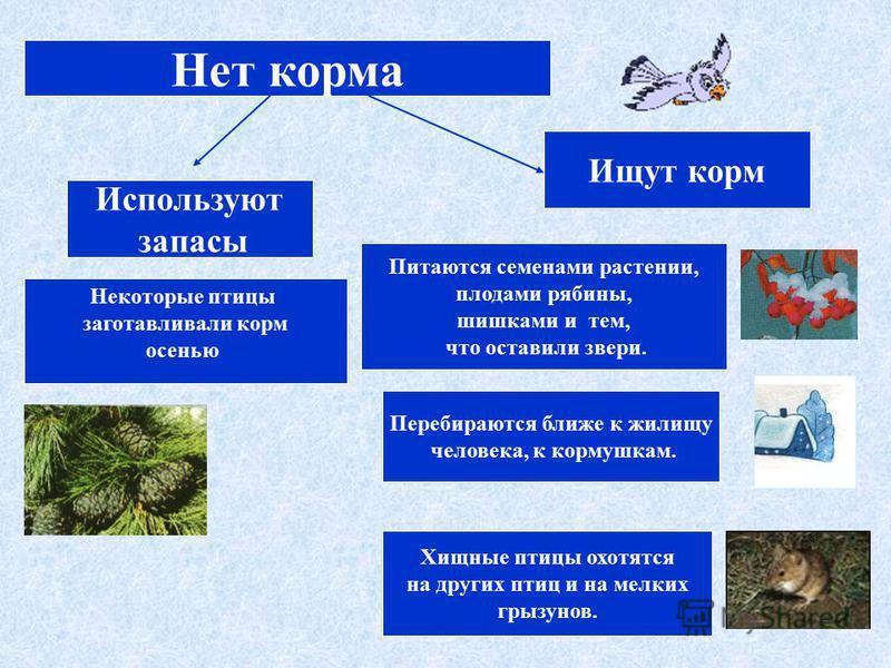 Нет корма Используют запасы Хищные птицы охотятся на других птиц и на мелких грызунов. Питаются семенами растении, плодами рябины, шишками и тем, что оставили звери. Ищут корм Перебираются ближе к жилищу человека, к кормушкам. Некоторые птицы заготав