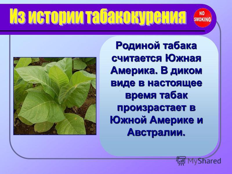 Родиной табака считается Южная Америка. В диком виде в настоящее время табак произрастает в Южной Америке и Австралии.