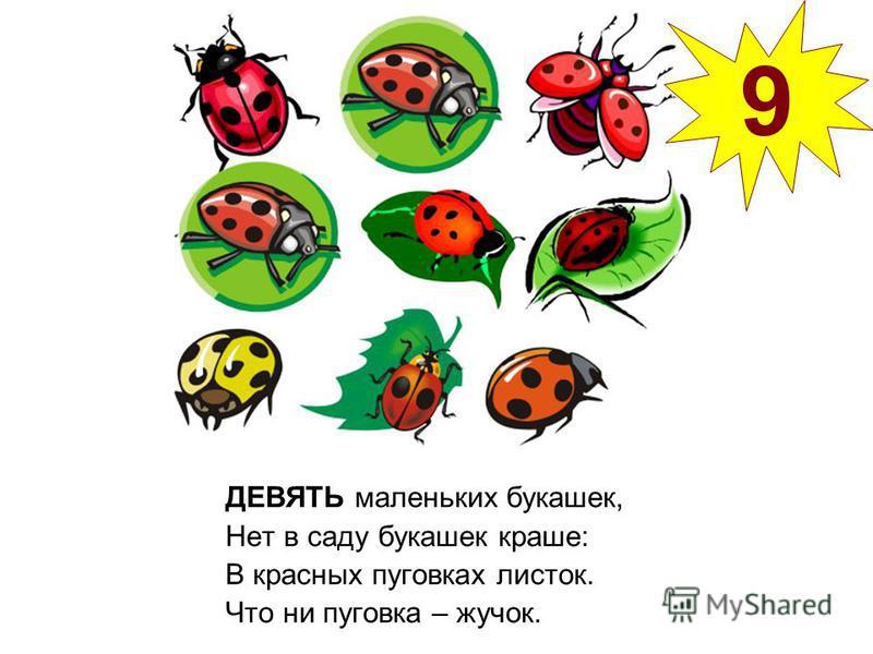 ДЕВЯТЬ маленьких букашек, Нет в саду букашек краше: В красных пуговках листок. Что ни пуговка – жучок. 9