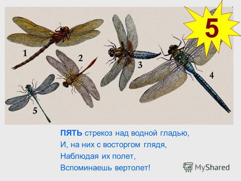 ПЯТЬ стрекоз над водной гладью, И, на них с восторгом глядя, Наблюдая их полет, Вспоминаешь вертолет! 5