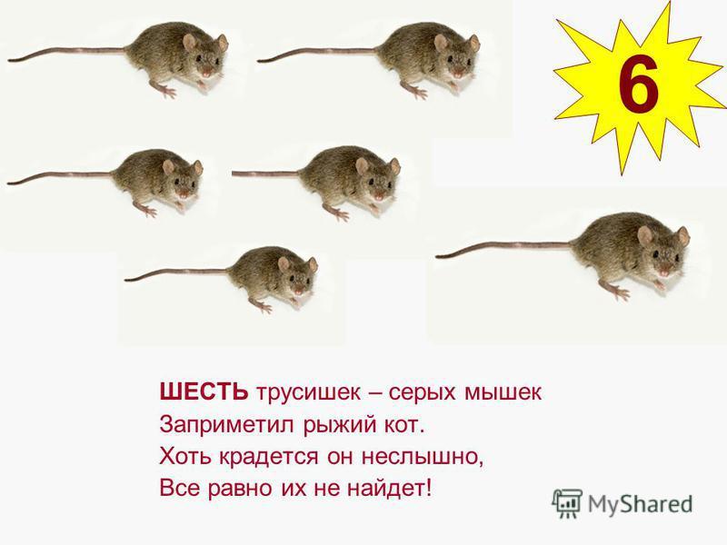 ШЕСТЬ трусишек – серых мышек Заприметил рыжий кот. Хоть крадется он неслышно, Все равно их не найдет! 6