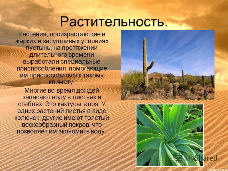 Растительность. Растения, произрастающие в жарких и засушливых условиях пустынь, на протяжении длительного времени выработали специальные приспособления, помогающие им приспособиться к такому климату. Многие во время дождей запасают воду в листьях и