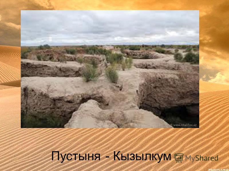 Пустыня - Кызылкум