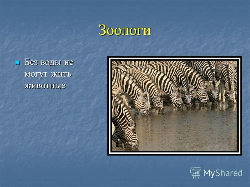 Зоологи Без воды не могут жить животные Без воды не могут жить животные