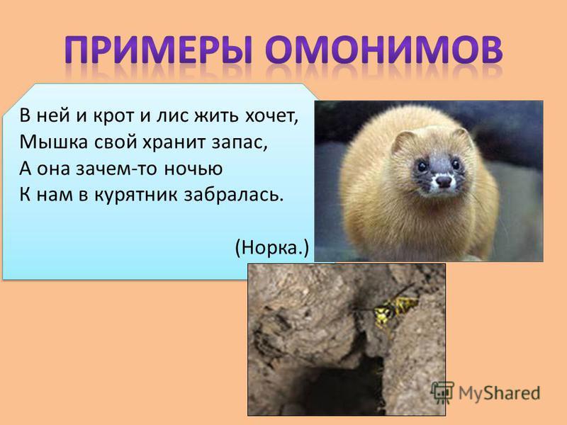 В ней и крот и лис жить хочет, Мышка свой хранит запас, А она зачем-то ночью К нам в курятник забралась. (Норка.)