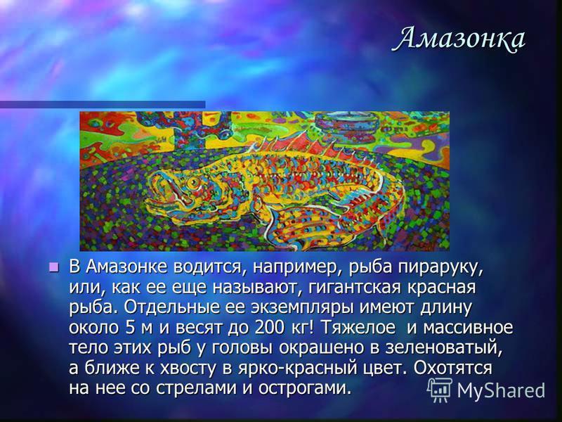 Амазонка В Амазонке водится, например, рыба пираруку, или, как ее еще называют, гигантская красная рыба. Отдельные ее экземпляры имеют длину около 5 м и весят до 200 кг! Тяжелое и массивное тело этих рыб у головы окрашено в зеленоватый, а ближе к хво