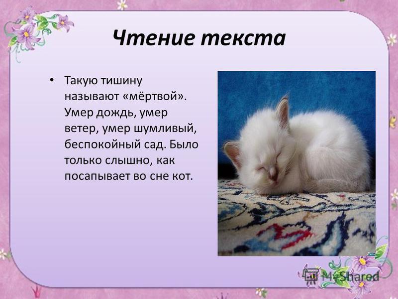 Чтение текста Такую тишину называют «мёртвой». Умер дождь, умер ветер, умер шумливый, беспокойный сад. Было только слышно, как посапывает во сне кот.