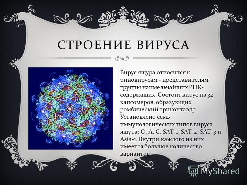 СТРОЕНИЕ ВИРУСА Вирус ящура относится к риновирусам - представителям группы наимельчайших РНК - содержащих. Состоит вирус из 32 капсомеров, образующих ромбический триконтаэдр. Установлено семь иммунологических типов вируса ящура : О, А, С, SAT-1, SAT