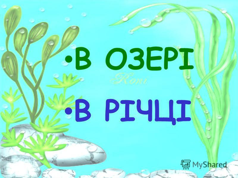 Де жила срібляста рибка ?