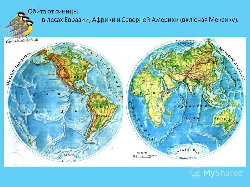 Обитают синицы в лесах Евразии, Африки и Северной Америки (включая Мексику).