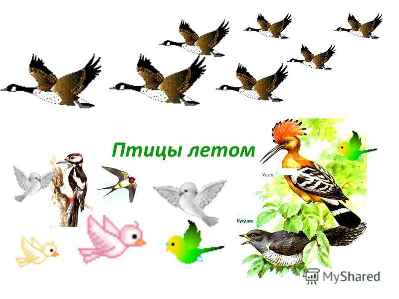 Птицы летом