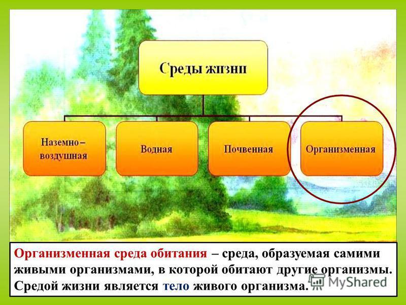 Организменная среда обитания – среда, образуемая самими живыми организмами, в которой обитают другие организмы. Средой жизни является тело живого организма.