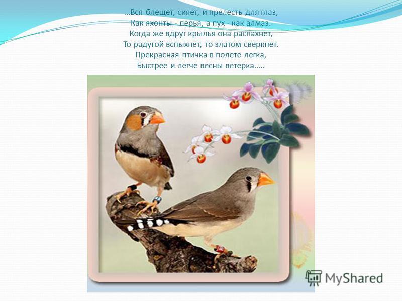 ...Вся блещет, сияет, и прелесть для глаз, Как яхонты - перья, а пух - как алмаз. Когда же вдруг крылья она распахнет, То радугой вспыхнет, то златом сверкнет. Прекрасная птичка в полете легка, Быстрее и легче весны ветерка.....