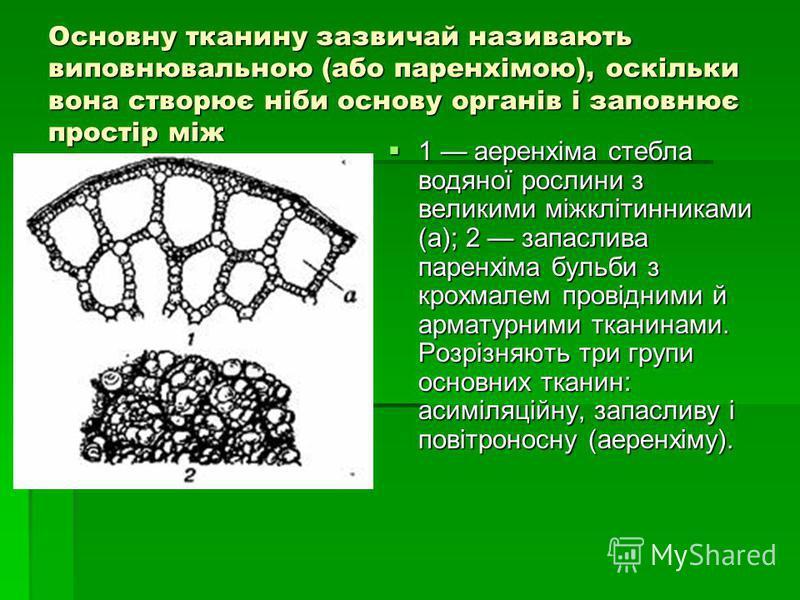 Основну тканину зазвичай називають виповнювальною (або паренхімою), оскільки вона створює ніби основу органів і заповнює простір між 1 аеренхіма стебла водяної рослини з великими міжклітинниками (а); 2 запаслива паренхіма бульби з крохмалем провідним