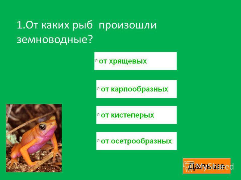 1. От каких рыб произошли земноводные?
