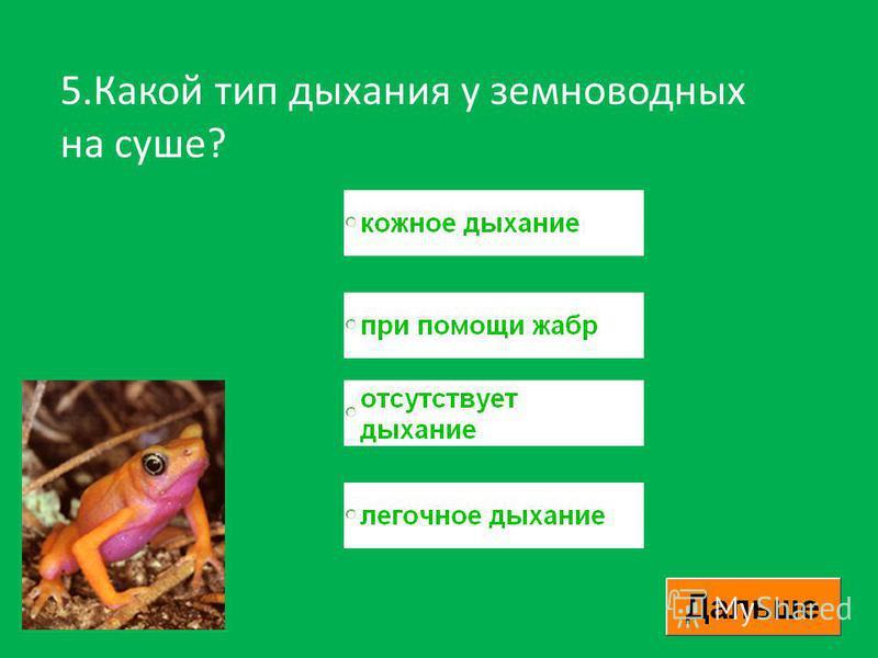 5. Какой тип дыхания у земноводных на суше?