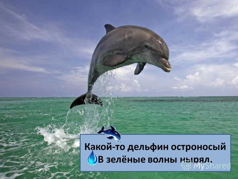 Какой-то дельфин остроносый В зелёные волны нырял.