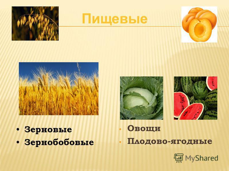 Овощи Плодово-ягодные Зерновые Зернобобовые Пищевые
