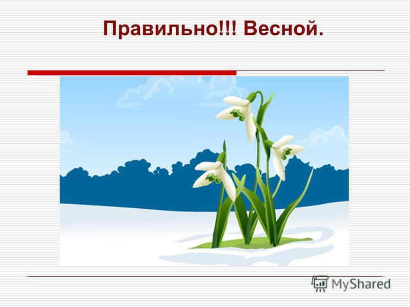 Правильно!!! Весной.