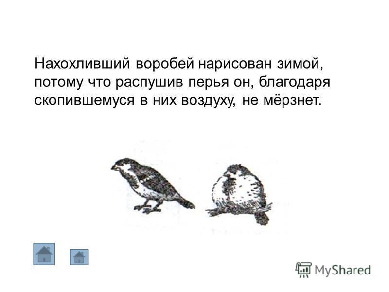 Нахохливший воробей нарисован зимой, потому что распушив перья он, благодаря скопившемуся в них воздуху, не мёрзнет.