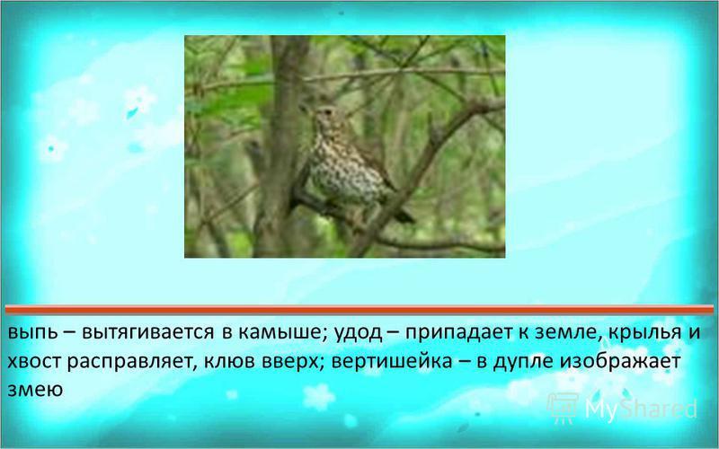 Ответ 123456789101112131415161718192021222324252627282930? Как могут прятаться и маскироваться птицы ?