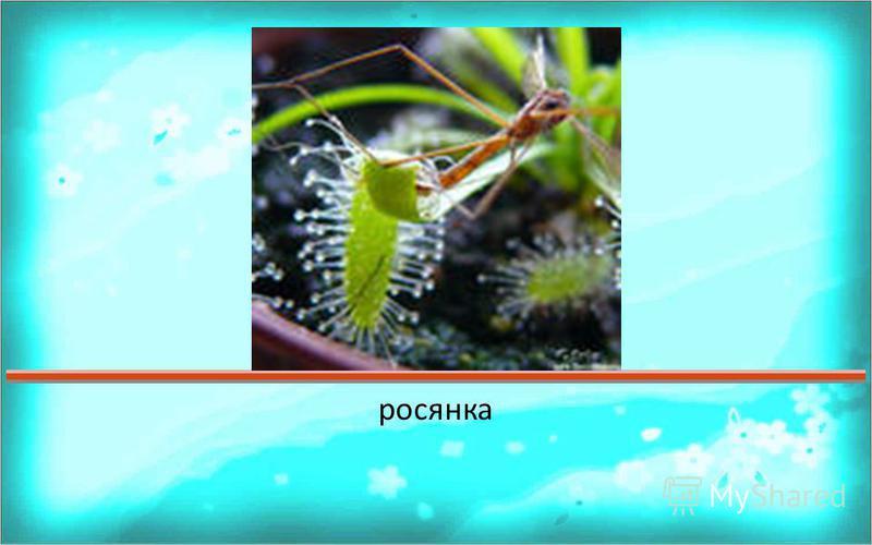 Ответ 123456789101112131415161718192021222324252627282930? Какое растение Бианки назвал комариная смерть ?