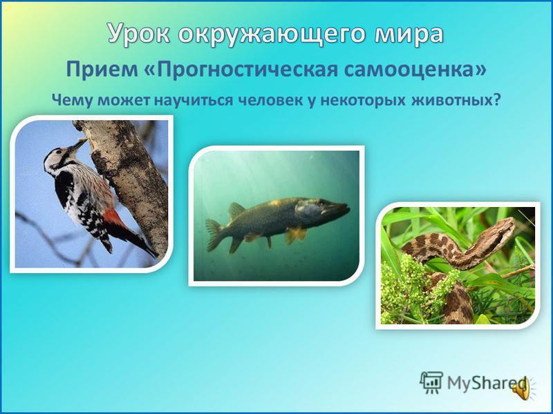 Прием «Прогностическая самооценка» Чему может научиться человек у некоторых животных?