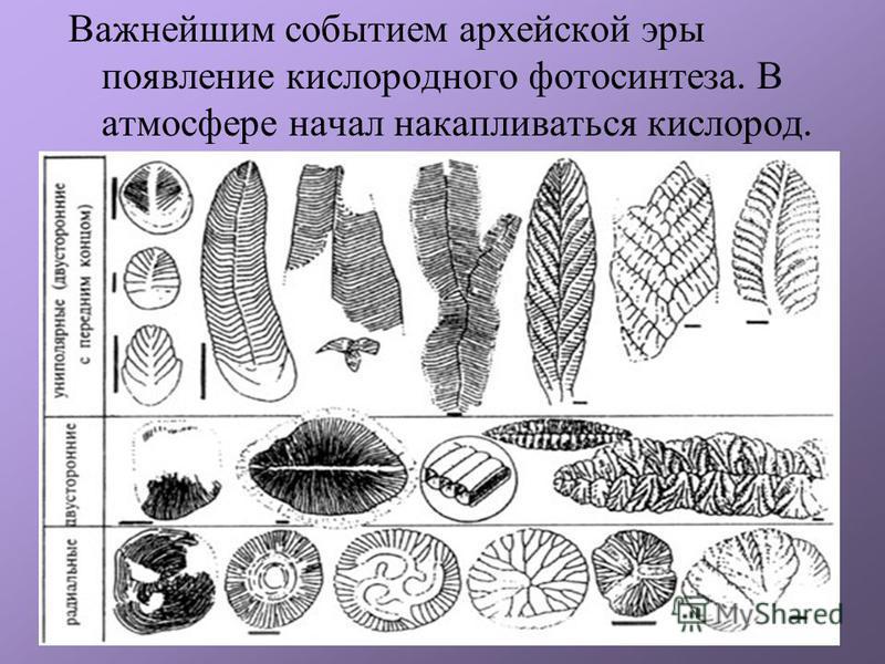 Важнейшим событием архейской эры появление кислородного фотосинтеза. В атмосфере начал накапливаться кислород.