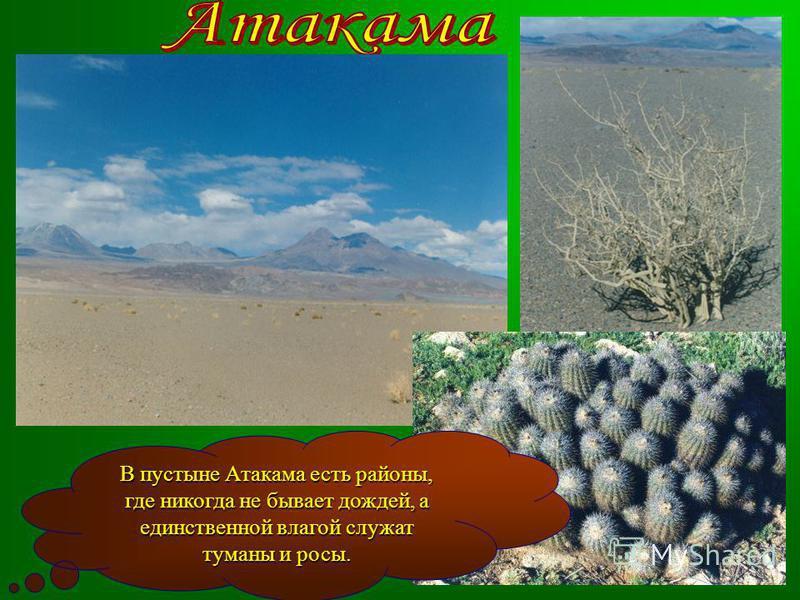 В пустыне Атакама есть районы, где никогда не бывает дождей, а единственной влагой служат туманы и росы.