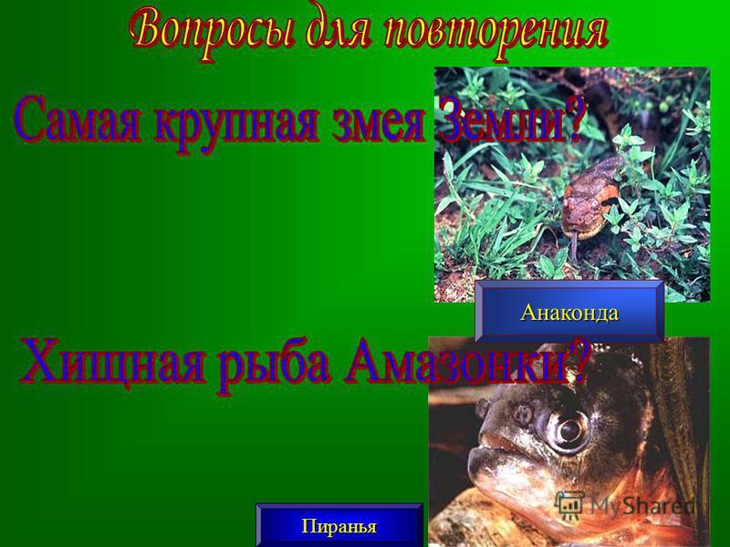 Анаконда Пиранья