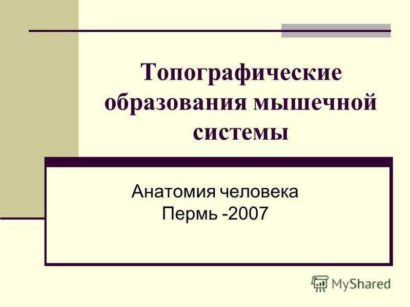 Топографические образования мышечной системы Анатомия человека Пермь -2007