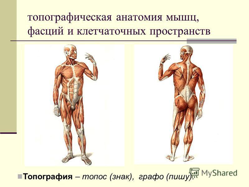 топографическая анатомия мышц, фасций и клетчаточных пространств Топография – топос (знак), графо (пишу).
