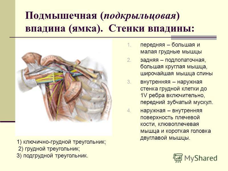 Подмышечная (подкрыльцовая) впадина (ямка). Стенки впадины: 1. передняя – большая и малая грудные мышцы 2. задняя – подлопаточная, большая круглая мышца, широчайшая мышца спины 3. внутренняя – наружная стенка грудной клетки до 1V ребра включительно,