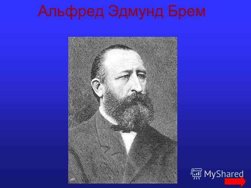 Альфред Эдмунд Брем