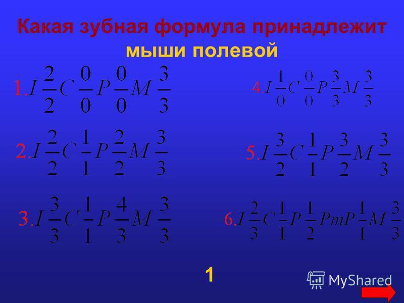 Какая зубная формула принадлежит мыши полевой 1