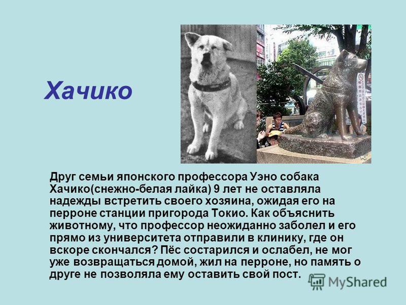 Хачико Друг семьи японского профессора Уэно собака Хачико(снежно-белая лайка) 9 лет не оставляла надежды встретить своего хозяина, ожидая его на перроне станции пригорода Токио. Как объяснить животному, что профессор неожиданно заболел и его прямо из