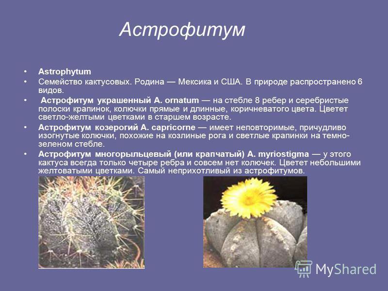 Виды кактусов Апорокактус Aporocactus Семейство кактусовых. Род дизокактус. Родина Мексика. В природе распространено 6 видов. Вообще род дизокактусов сложный и проблематичный в выращивании. В домашних условиях легче всего выращивать Апорокактус плете